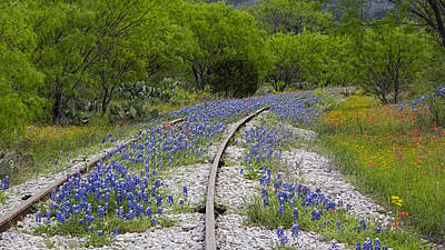 Railway Wildflowers Print by Stephen Stookey