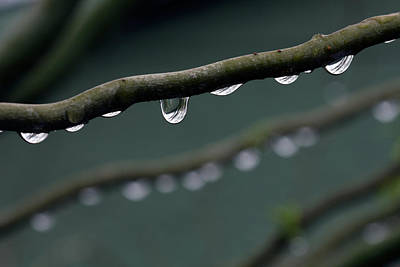 Rain Branch Print by Photography by Gordana Adamovic Mladenovic