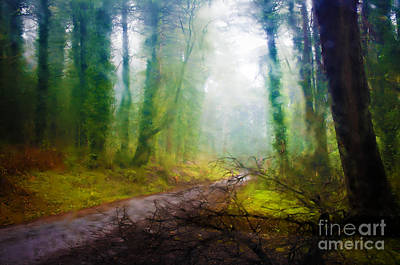Abstract Photograph - Rain Forest by Carlos Caetano
