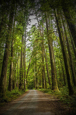Rain Forest Dirt Road Print by Randall Nyhof