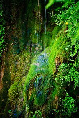Rain Forest Print by Louis Dallara