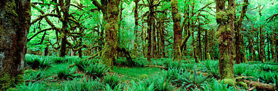 Moss Photograph - Rain Forest, Olympic National Park by Panoramic Images