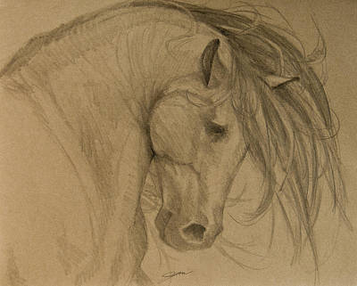 Horse Art Drawing - Rain Shadow - Grey Version by Jani Freimann