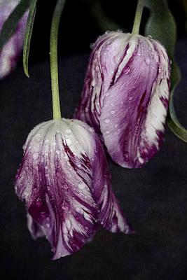 Blossoms Photograph - Rain Tulips by Oscar Gutierrez