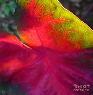 Rainbow Coleus 2 Print by Jeff Breiman
