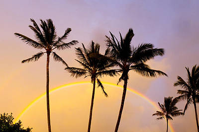 Rainbow Palms Print by Sean Davey