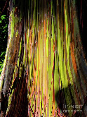 Rainbow Tree Print by Jon Burch Photography