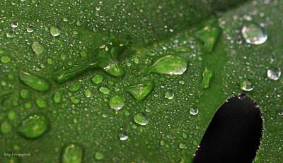 Photograph - Raindrops by Kay Lovingood