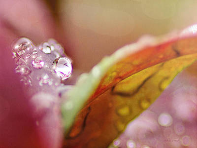 Autumn Leaf On Water Mixed Media - Raindrops On Nandina by Bellesouth Studio