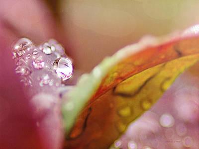 Raindrops On Nandina Print by Bellesouth Studio