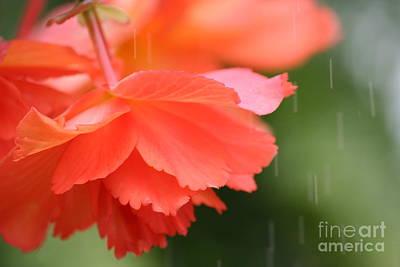 Raindrops On Roses Print by Julie Lueders