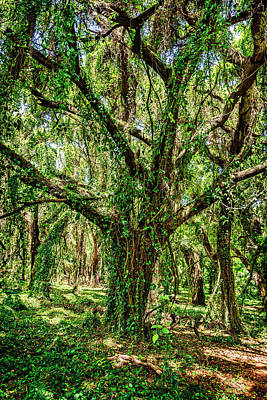 Rainforest Print by Kelley King