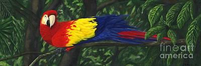 Macaw Art Painting - Rainforest Parrot by JoAnn Wheeler