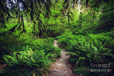 Rainforest Trail Print by Joan McCool