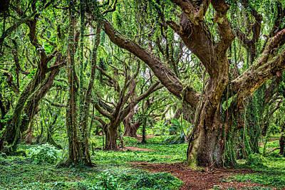 Rainforest Trees Print by Kelley King