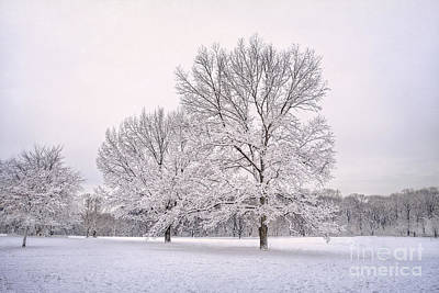 Snowstorm Photograph - Raising With The Winterfrost by Evelina Kremsdorf