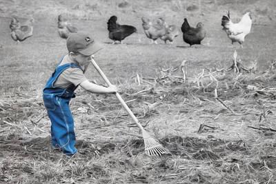 Chicken Digital Art - Raking The Garden by Lori Deiter
