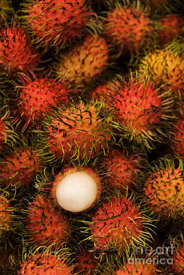Rambutan Print by Gloria & Richard Maschmeyer - Printscapes