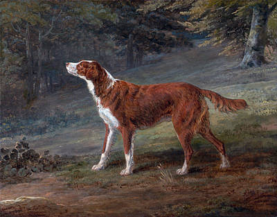 George Garrard Painting - Ranger A Setter The Property Of Elizabeth Gray by George Garrard