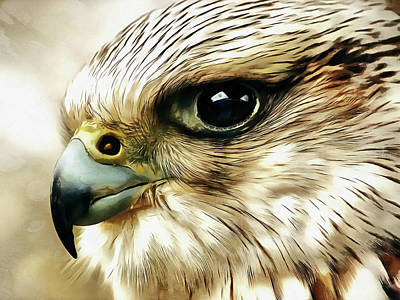 Falcon Painting - Raptor by Jacky Gerritsen