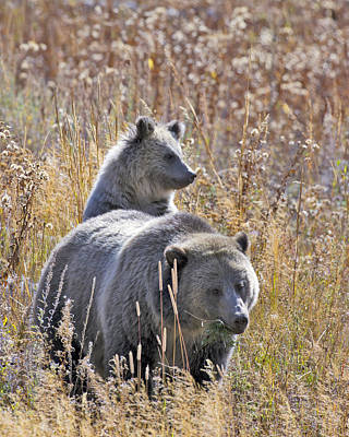 Bear Photograph - Raspberry And Her Cub by Gary Langley
