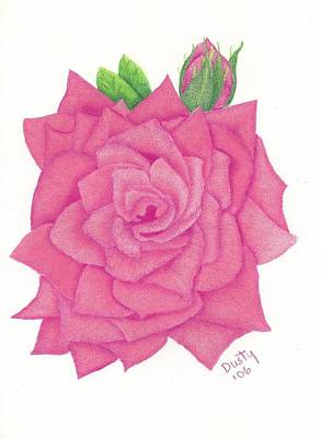 Raspberry Drawing - Raspberry Pink Rose by Dusty Reed