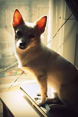 Little Dogs Photograph - Rasta Rocko by Mandy Shupp