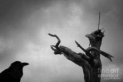 Archetype Photograph - Raven And Shamanic Tree  by Dave Gordon
