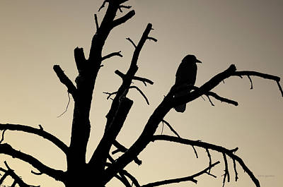 Brown And Sepia Ravens Photograph - Raven Tree II Bw Toned by David Gordon