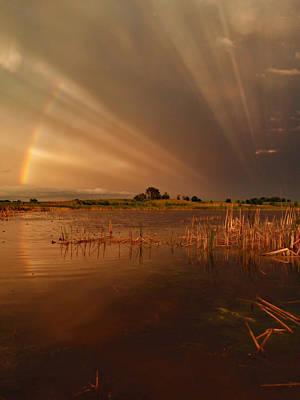Peterson Nature Photograph - Nature's Light Show by James Peterson