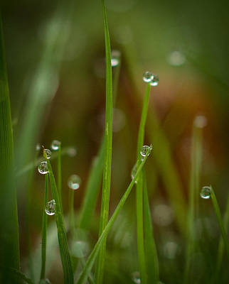 Photograph - Raindrops by Marilyn Wilson