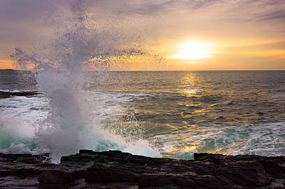 Bailey Island Photograph - Reaching by Benjamin Williamson