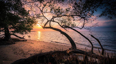 Evening Scenes Photograph - Reaching For The Sun by Marvin Spates