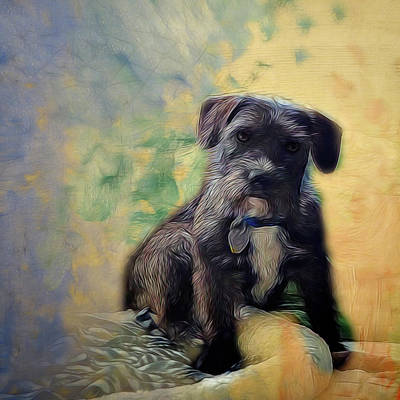 Schnauzer Art Digital Art - Ready For A Nap by Ann Powell