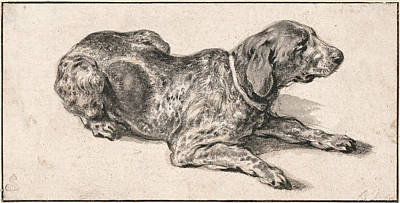 Aelbert Cuyp Drawing - Reclining Dog by Aelbert Cuyp
