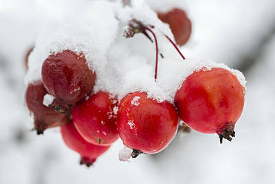 Snow Photograph - Red And White by Sebastian Musial