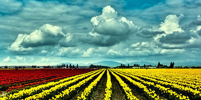 Flowers Photograph - Red And Yellow Tulip Fields by David Patterson