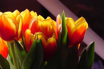 Red And Yellow Tulips Original by Geralyn Palmer