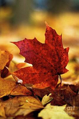 Red Autumn Print by Gary Bridger