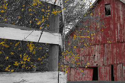 Red Barn And Forsythia Print by Dylan Punke