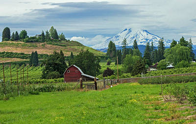 Landscape Photograph - Red Barn And Mt Adams by Teresa Herlinger