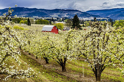 Rainy Day Photograph - Red Barn And The Pear Orchards by Teri Virbickis