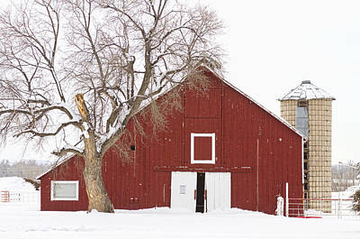 Red Barn Winter Country Landscape Print by James BO  Insogna