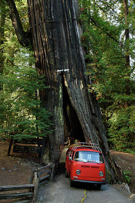 Red Bay Window Bus Drives Through A Tree Print by Richard Kimbrough