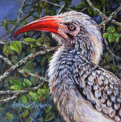 Hornbill Painting - Red Billed Hornbill by Denise Horne-Kaplan
