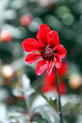 Photograph - Red Bokeh2 by Carolyn Stagger Cokley