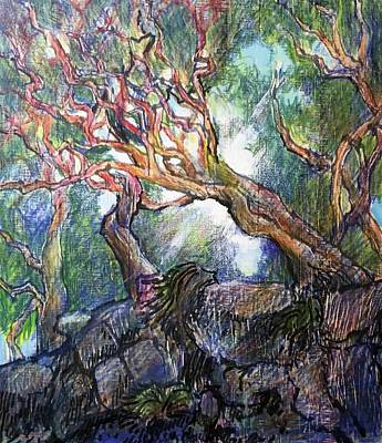 Dappled Light Drawing - Red Branch Cypress, Point Lobos by Bill Jeng
