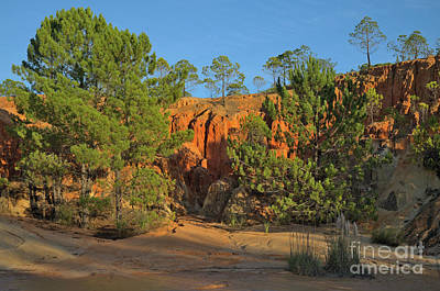Ludo Photograph - Red Cliffs And Trees by Angelo DeVal