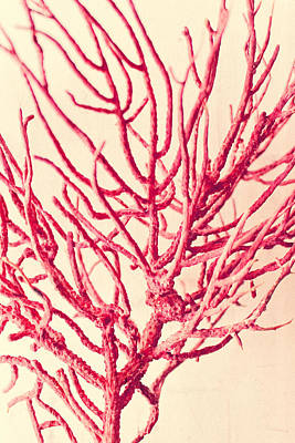 Red Coral Abstract No. 2 Print by Colleen Kammerer