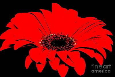 Black Top Digital Art - Red Daisy On Black Background by Marsha Heiken